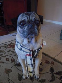 Burberry Scarf: Obviously Brokenhearted that no one got him a real Burberry Trench, not this #%&*^#! knock off scarf.