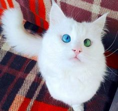 Funny and Cute Kittens will Raise the Mood [20 pics]