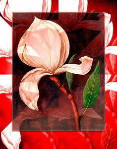 'Floral Abstrakt  Magnolie' von Gertrude  Scheffler bei artflakes.com als Poster oder Kunstdruck $18.71