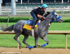 Creative Cause is another horse I am rooting for in the Kentucky Derby