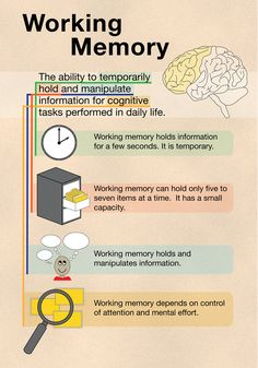 Working memory illustration