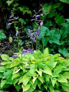 05 August 2013 - Northumberland Alpine Gardener's Diary - Gardeners' Diaries - Alpine Garden Society
