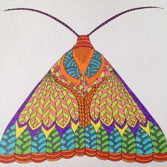 From Millie Marottas Animal Kingdom Moth