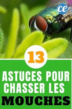13 Astuces Naturelles Pour Chasser Les Mouches Définitivement. How To Plan, Tips, Danger, Position, Couture, Cavalier, Aloe Vera, Crochet, Cleaning Hacks
