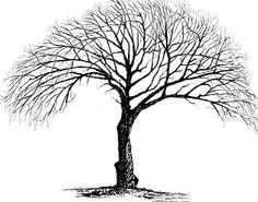 """""""Winter Oak""""   Original Pen & Ink by Steven Harris, ID"""