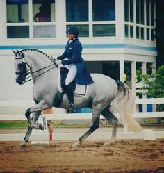 Fantastic opportunity to earn your medals or shoot for Young riders! 2003 PRE stallion by Gaucho II. Successful show record at every level competed and now ready for the Grand Prix. Many babies on the ground that are starting dressage and driving careers. $175,000