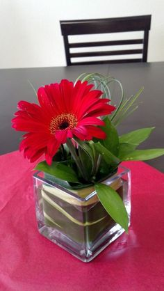 red gerbera daisy, my favorite flower! also come in white. Daisy Wedding Decorations, Wedding Reception Flowers, Flower Decorations, Wedding Ideas, Red Wedding, Gerbera Daisy Centerpiece, Gerbera Daisy Wedding, Small Flower Arrangements, Small Centerpieces