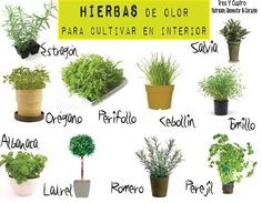 Hierbas con olor para cultivar en el interior.