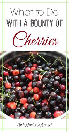 What to Do with a Bounty of Cherries | And Here We Are... #cherries #foraging #preserving #homebrewing