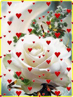 Pin by iêda on frases bom dia com flores, bom dia rosa, imag Beautiful Flowers Wallpapers, Beautiful Rose Flowers, Love Rose, Rose Flower Wallpaper, Flowers Gif, Love You Gif, Love You Images, Beautiful Love Pictures, Beautiful Gif