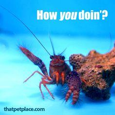 How You Doin'? | thatpetplace.com