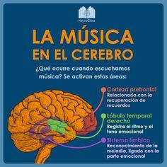 ✅ ¿Cuáles son las estructuras cerebrales implicadas? 🧠 ✅ ¿Por qué nos emocionamos con la música? 🎵 ✅ ¿Qué es el efecto Mozart?  Brain Science, Brain Gym, Learning Psychology, Medicine Notes, Brain Memory, Curious Facts, Positive Phrases, Medical Anatomy, Magic Words