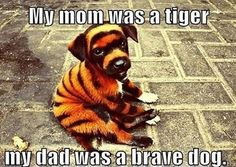 MOm was a tiger, dad was a  brave dog.