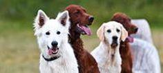 Hunde willkommen, Ferien mit Hund, Urlaub mit Hund, Berge, Alpen, Engadin St.Moritz, Graubünden, Schweiz