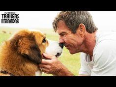 Todos têm um destino para ser cumprido. Depois de ganhar mais uma chance de viver, o cachorro Bailey tenta descobrir qual o seu.   Tentem assistir a esse trailer sem se apaixonar ou sorrir!  #QuatroVidasdeUmCachorro chega em janeiro/17 aos cinemas UCI!!