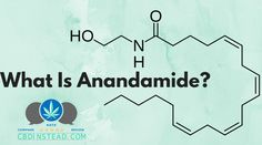 Did you know that CBD elevates your anandamide levels? Find out in this article what that can mean for you! #CBDfacts #CBDhelps #CBDoil