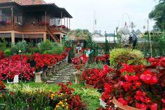 Tempat Wisata Di Lembang