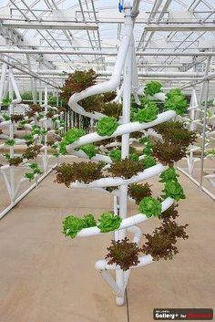 This one looks cool, but you can get more out of the space growing vertically the length of the greenhouse
