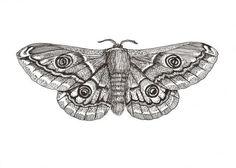 Resultado de imaxes para moth drawings