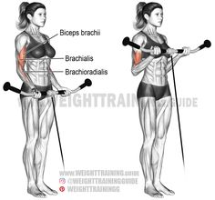 Cable curl. An isolation exercise. Target muscle: Biceps Brachii. Synergists: Brachialis and Brachioradialis.