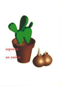 stilllife:sapoten onion