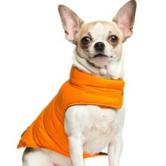 Chihuahua Clothing Patterns | ThriftyFun