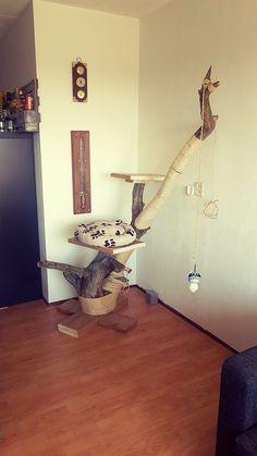 De kat krapt de krullen van de trap