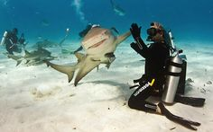 """Shark High Five by Paul Spielvogel. """" It's not everyday that we see a smiling shark give a scuba diver a high-five. Eli Martinez, editor of Shark Diver Magazine, was diving in the Caribbean Sea, off. High Five, Shark Week, Hai Shirt, Animal Pictures, Funny Pictures, Hilarious Photos, Funny Pics, Funny Memes, Animals Photos"""