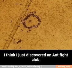 "The first rule of ant fight club... ""First rule about Fight Club. We don't talk about Fight Club!"""