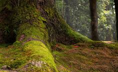 ~ Matt Conaghan -Forest Floor - moss and trees that surround the Golden Pavilion in Kyoto, Japan.