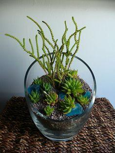 terrarium from Pistils Cactus Terrarium, Terrarium Containers, Succulents In Containers, Cacti And Succulents, Planting Succulents, Planting Flowers, Glass Terrarium, Air Plants, Garden Plants