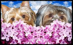 Yorkies love the smell of Lilacs!