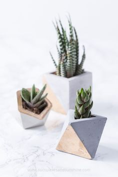 Succulent Garden Ideas These concrete planters with succulents are so elegant and modern!These concrete planters with succulents are so elegant and modern! How To Water Succulents, Growing Succulents, Succulents In Containers, Succulents Garden, Succulent Planter Diy, Diy Planters, Garden Planters, Succulent Ideas, Modern Planters