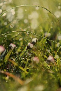 Spring Flowers Springtime Spring Has Arrived Frühling