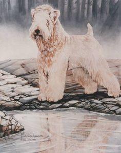 Soft Coated Wheaten Terrier by Martha Van Loan