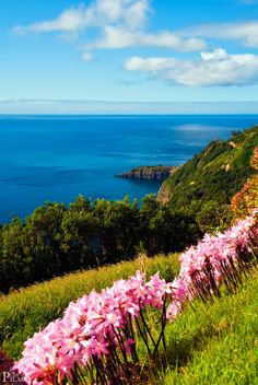 Cliffs of São Miguel Island, Azores Portugal