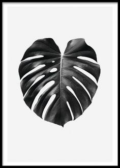 Elegant botaniskt print med monstera. Tavla med blad. Poster / affisch med blad…