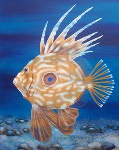©John Dory Fish - acrylic by ©Anna Moore (via ArtistRising)