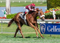 4/29/16. Lady Shipman Has 'Blossomed' Since Dubai, Races Sunday At Belmont