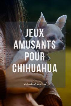 Le Chihuahua, Chihuahuas, Jouer, Rat Dog, Cute Baby Animals, Dogs, Fun Games, Beautiful Babies, Salt