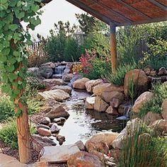 California native backyard, including small edible grapes climbing up the arbor.
