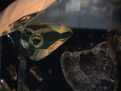 """Two-phase inclusion in quartz, i.e. gas bubbles in petroleum. From Pakistan. Get our free ebook """"10 Steps to Gem Identification"""" at http://fareastgem.institute"""
