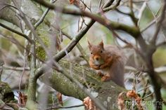 A weekend of Landscape Photography in the Lake District – Castlerigg, Derwentwater, Keswick, Ullswater and Red Squirrels!