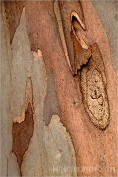 Eucalyptus Bark by Barbara Lee #patterns and #textures