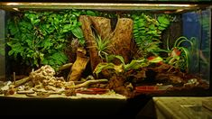 I took out a plant and added a layer of leaf litter on the right. I wanted to give them more open space for a while. Yeah, I know the water is dirty. I changed it that day. That's what it looks lik...
