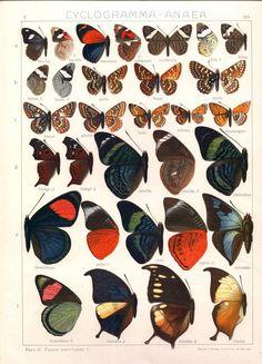 Seitz - Adalbert Seitz - Wikipedia, the free encyclopedia