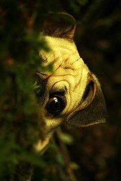 little spy:)