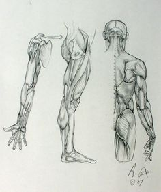 Anatomy 02 by andrewcox on DeviantArt