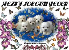 Good Morning Animation, Teddy Bear, Puppies, Night, Toys, Jar, Google, Random Stuff, Pet Dogs