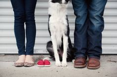Pregnancy announcement with a dog #pregnancyannouncement #baby #bordercollie